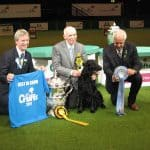 beautiful dog winning the Crufts dog show back in 2011