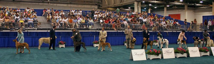 The Hounds group in the AKC dog show