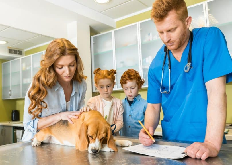 dog visiting the vet with her human family