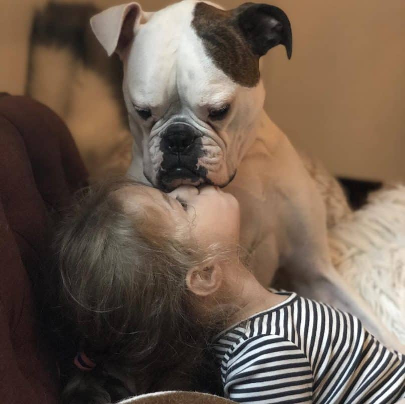 A Boxer Bulldog Mix being kissed by a little girl