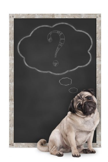 pug puppy dog sitting in front of blackboard with chalk question mark in thought bubble, isolated on white background