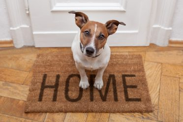 dog sitting on a welcome home doormat