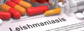 Leishmaniasis in Dogs – What you can do?