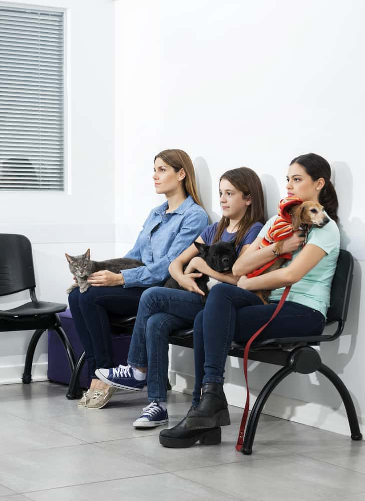 clients waiting at a veterinary clinic