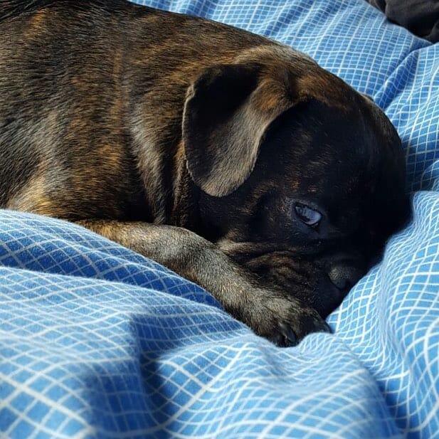 Black Bugg on a blanket
