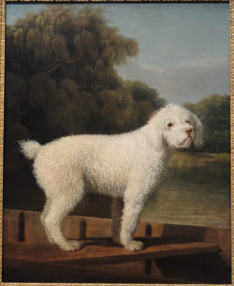 White Poodle in a Punt by George Stubbs, c. 1780, oil on canvas
