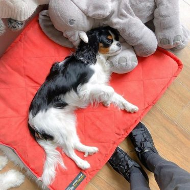 A dog is laying comfortably on a dog pad on top of its dog bed