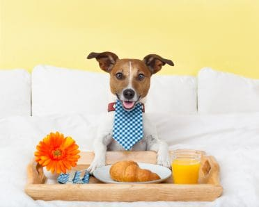 a dog having a nice breakfast in bed in a fancy hotel for dogs