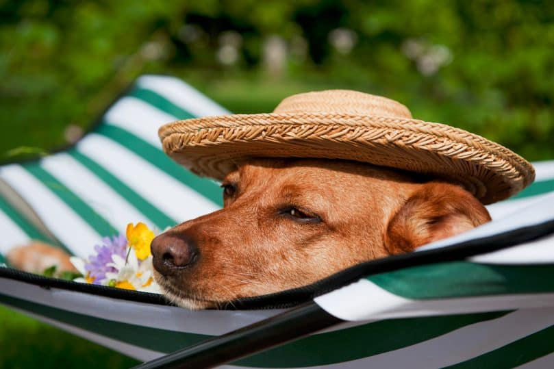A dog relaxing on a doggy bed in a boarding facilities' garden