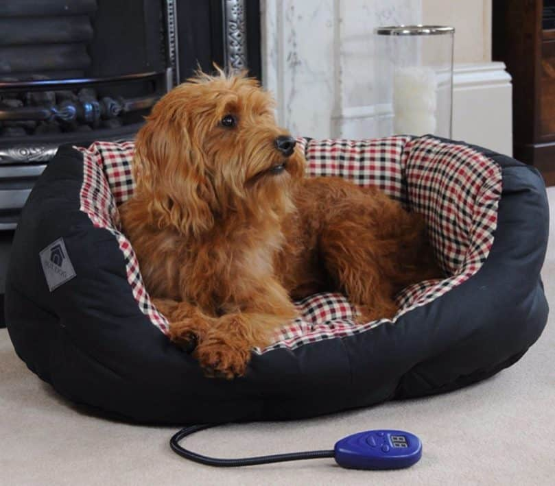 A shaggy dog relaxing while staying warm on a heated dog bed