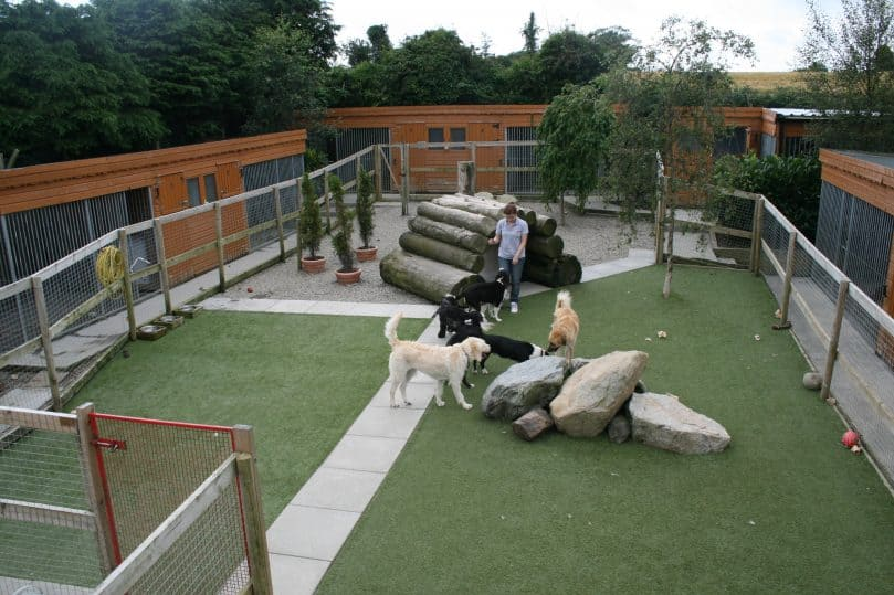 dogs playing inside a free-range boarding kennel