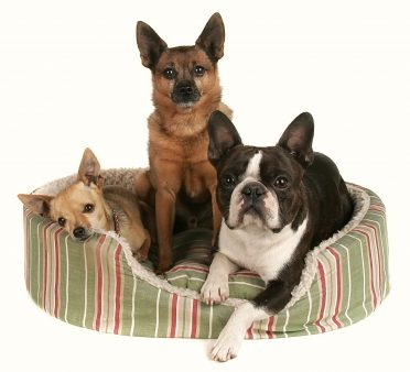 three small dogs in a bolster-type heated dog bed