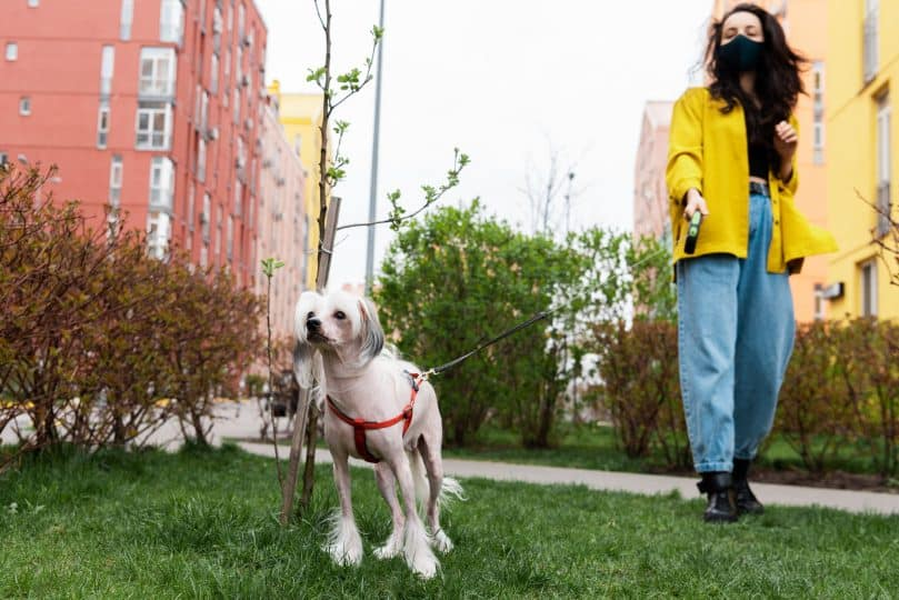 A woman walking her dog while wearing a mask in a small park without people during the Coronavirus pandemic